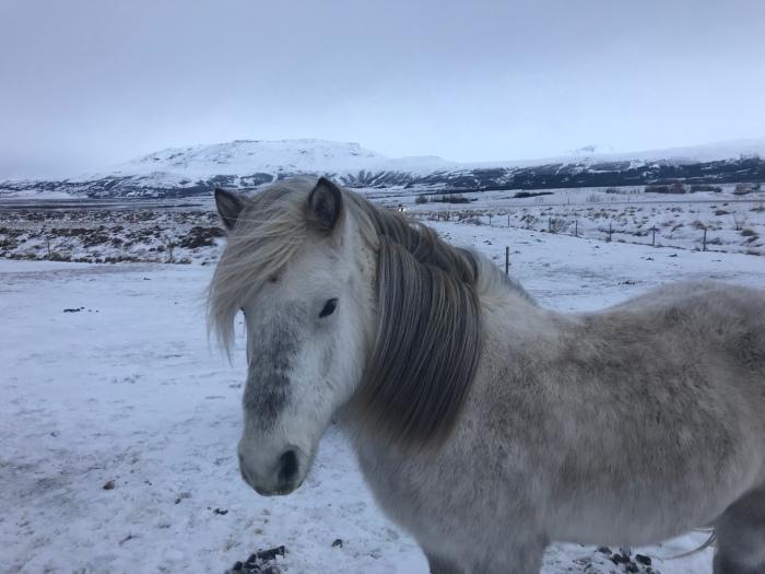 Gezi Notlari : Izlanda –I